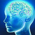 Омолаживаем мозг – открываем дверь в мир новых способностей!